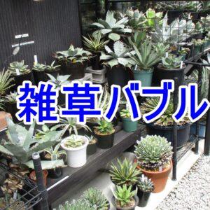 【雑草バブル】希少な観葉植物、多肉植物で儲ける方法